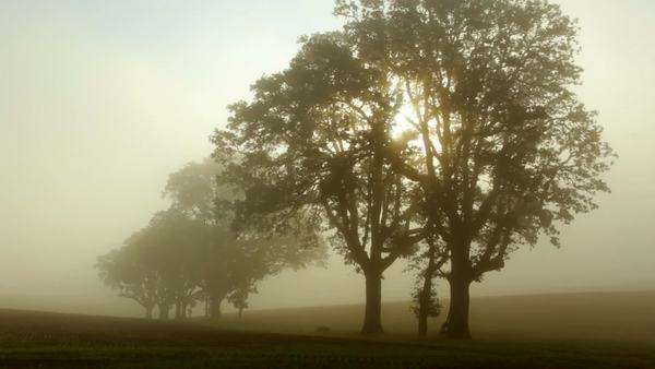 Fog moves through trees at sunrise, timelapse Royalty-free stock video