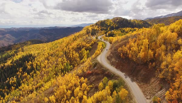 Aerial view above yellow aspen trees on the Nebo Loop in Utah. Royalty-free stock video