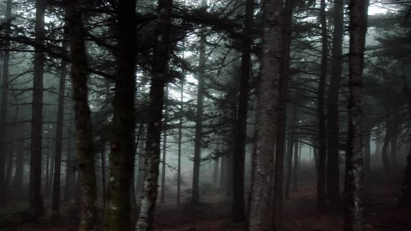 Pov driving passing by forest mountain pine trees surrounded in mist and fog Royalty-free stock video