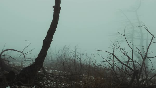 A barren land, burned out forest in mist and fog Royalty-free stock video