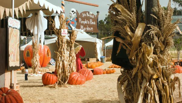 Static shot of a pumpkin patch Rights-managed stock video