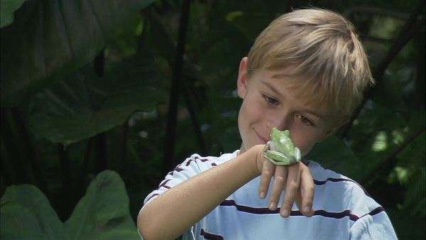 Static shot of a boy looking at a frog on his hand Rights-managed stock video