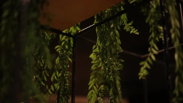 Hanging Plants In A Bar At Night Stock Video Footage Dissolve