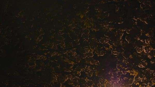 Medium shot of street light illuminating cherry trees at night Royalty-free stock video