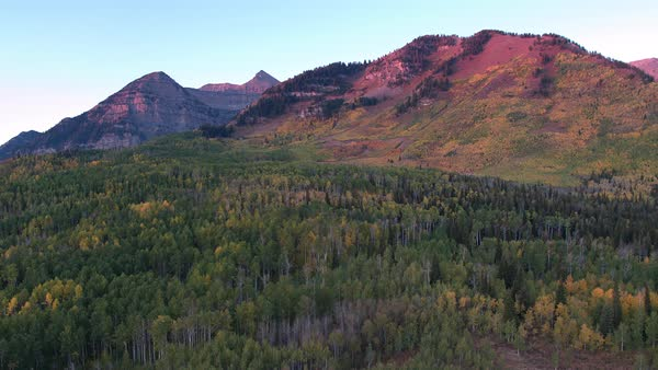 Aerial view of Fall color over colorful forest in the Utah mountains. Royalty-free stock video