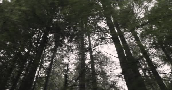 Low-angle shot of a forest from a moving car Royalty-free stock video