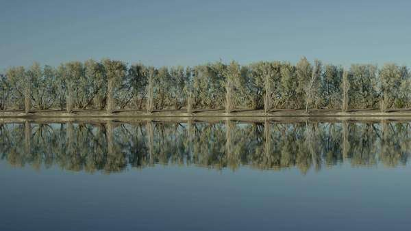 Wide-angle shot of trees reflecting in water Royalty-free stock video