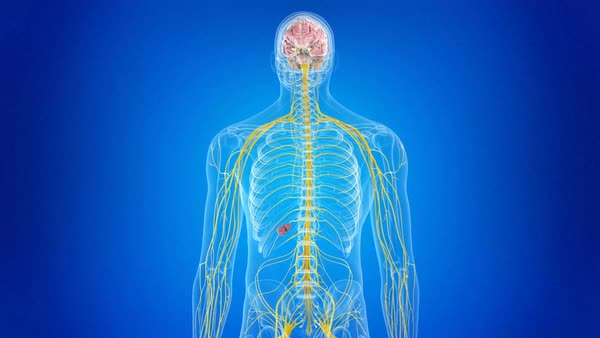 human body rotating against a blue background  showing the