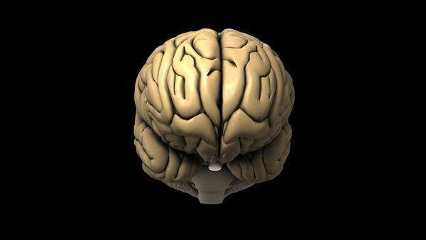 Animated Model Of A Human Brain Front View Moving From Below The To Above It