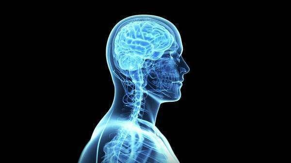 Animated human brain - photo#54
