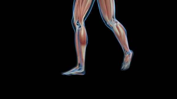animated model of the human skeletal system walking. - stock video, Skeleton