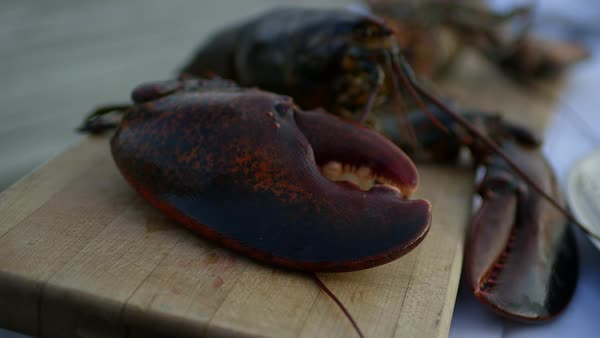 Close-up shot of a lobster on a cutting board Royalty-free stock video