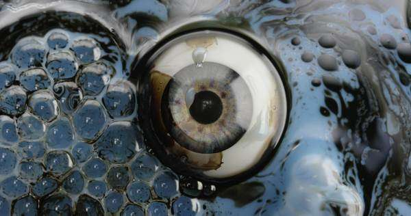 Static close-up of an eye in fluid Royalty-free stock video