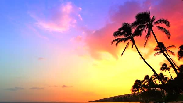 Tropics Palm Trees Sun Beach 4k Hd Desktop Wallpaper For: Incredible Sunset, Tropical Beach, Palm Tree Sunset