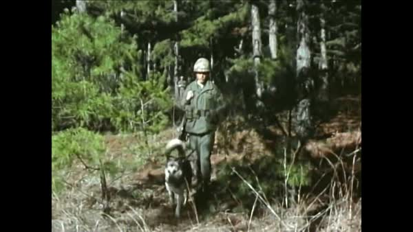 A Patrol Of United States Army Handlers Moves Forward With German