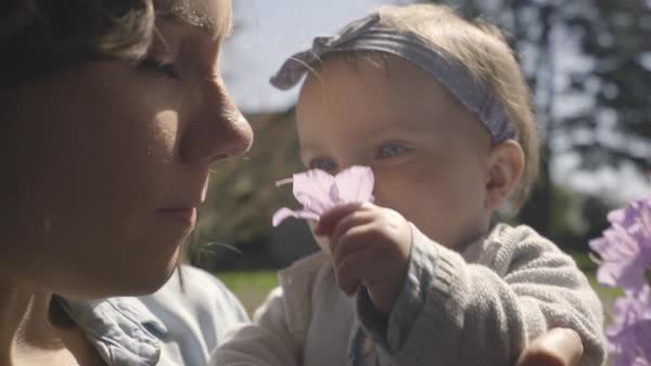 Mom teaches her baby girl how to smell flowers, her baby holds up the flower for her mom to smell, she laughs Royalty-free stock video