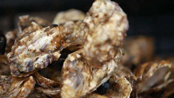 Close up shot of a rotating oyster sorting machine Royalty-free stock video