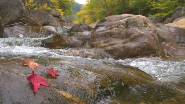 Red autumn leaf lying on wet mossy stone in rocky riverbed of crystal clear  mountain stream stock footage