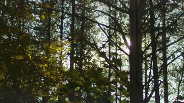 Sunlight through trees in forest Royalty-free stock video