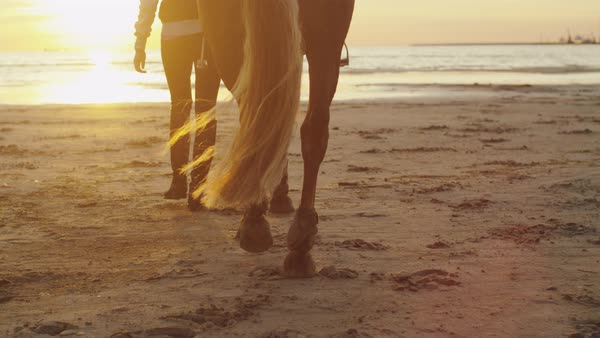 Young girl and her horse walking on beach in sunset light. Shot of horse legs. Royalty-free stock video