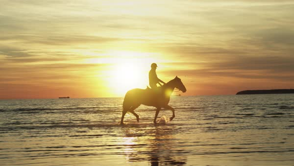 silhouetted of rider on horse at beach in sunset light. Royalty-free stock video