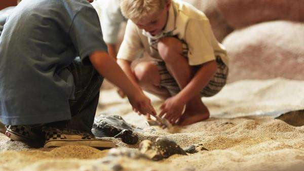 Medium shot of four boys brushing sand from fossils at excavation site in natural history museum Royalty-free stock video
