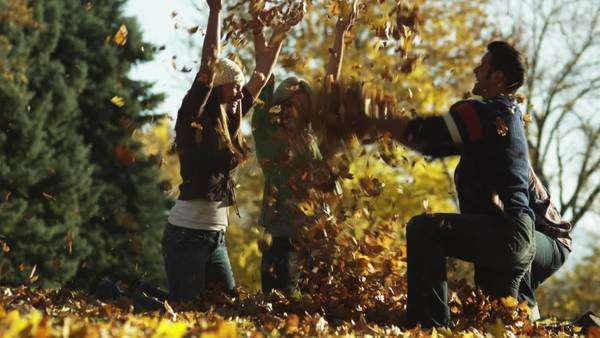 WS Slow motion of Young men and young women throwing leaves in park Royalty-free stock video