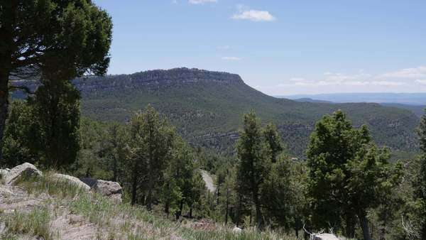 Pine trees frame a view of distant heights in the Sierra de Gudar. Royalty-free stock video