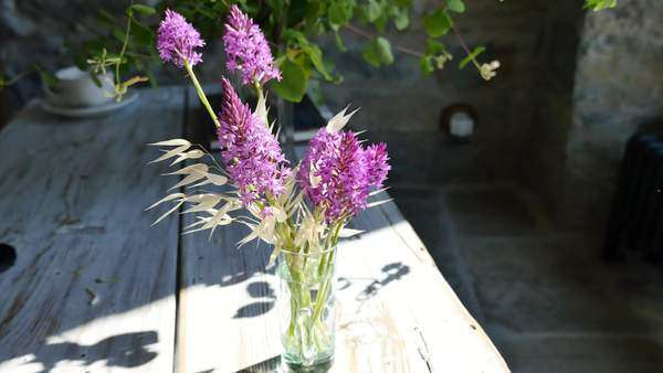 Tiny wild orchids in a vase. Royalty-free stock video