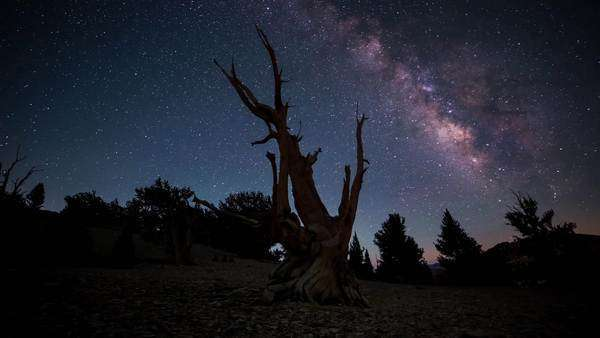 Timelapse dolly shot of Ancient Bristlecone Pine Forest moonrise with the milky way. Rights-managed stock video