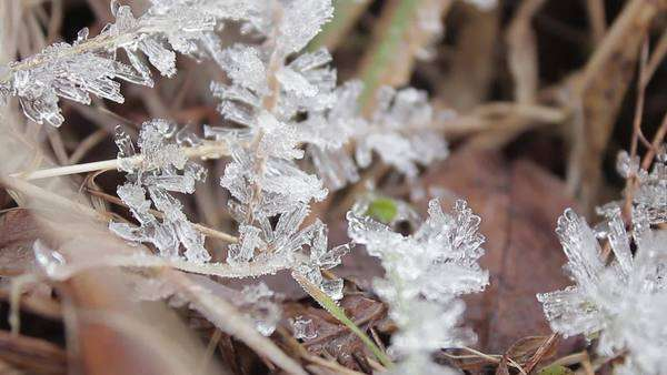 Close-up shot of frost-covered grass Royalty-free stock video