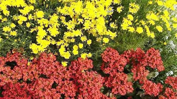 Plant Nursery Agra Uttar Pradesh