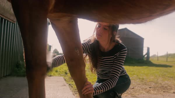 Medium shot of woman brushing a horse's leg on a ranch Royalty-free stock video