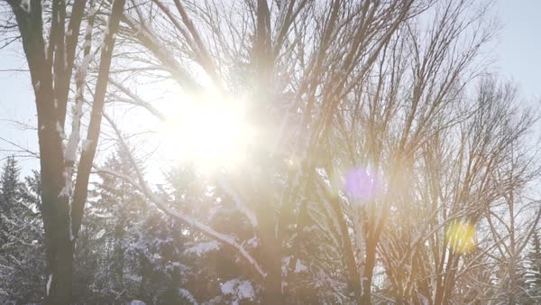 Medium shot of a sunny forest in winter Royalty-free stock video