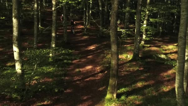 Wide shot of two cyclists passing a path in dark dense forest Royalty-free stock video
