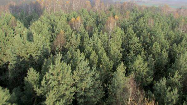 Forest, aerial shot from hot air balloon Royalty-free stock video