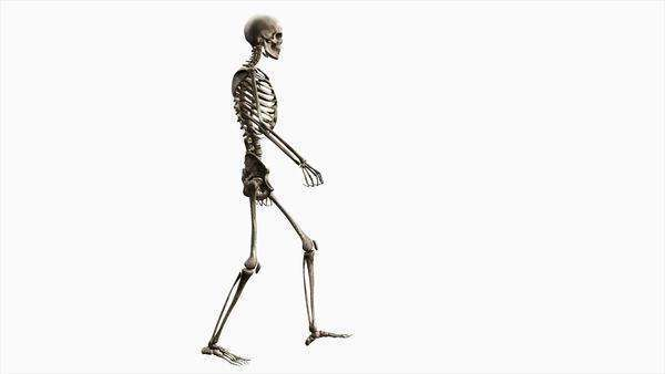 Computer animation of the male skeletal system walking on a white background, side view. Royalty-free stock video