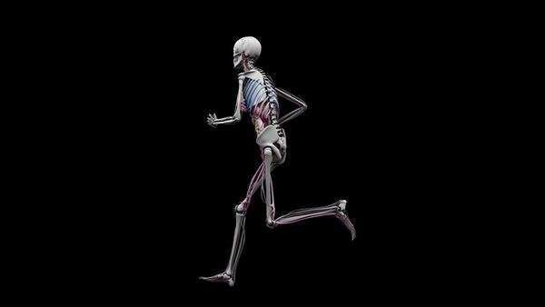 Computer animation of the female body running showing internal organs, on a black background, orbital view. Royalty-free stock video