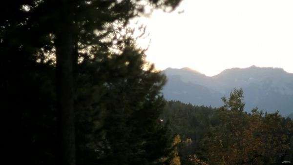 A view of the mountain range from beside a tree, and looking over the forest Royalty-free stock video