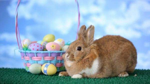 Easter bunny and basket with eggs Royalty-free stock video