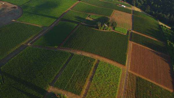 Aerial shot of vineyards, Willamette Valley Oregon Royalty-free stock video