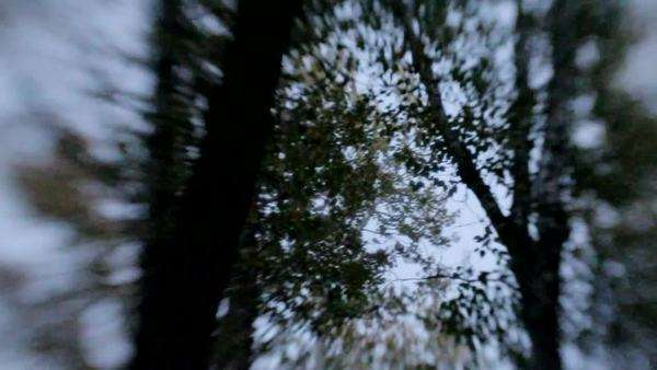 Night is falling in the woods, and the trees have a dreamlike quality to them Royalty-free stock video