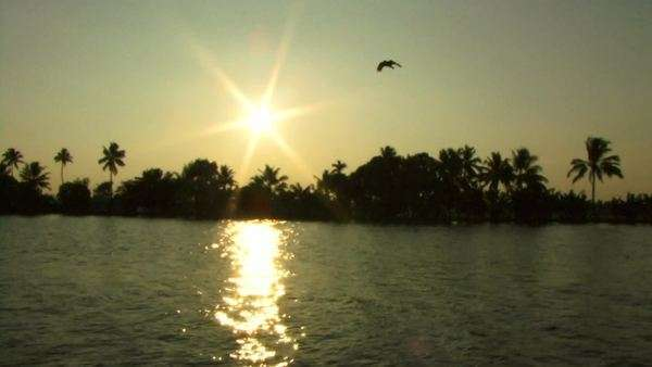 Sunset with palm trees on the Backwaters, Cochin, KeraIndia Royalty-free stock video