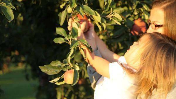 Mother and young daughter pick an apple Royalty-free stock video