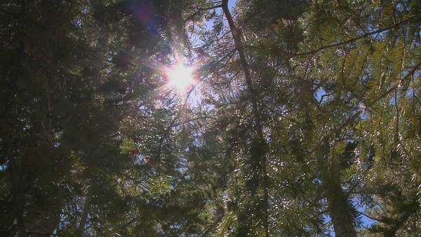 A moving shot reveals the forest canopy and sunlight coming through. Royalty-free stock video