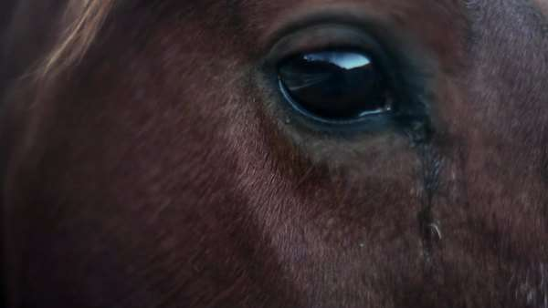 Close-up on horse's head and eyes and he gets a pet Royalty-free stock video