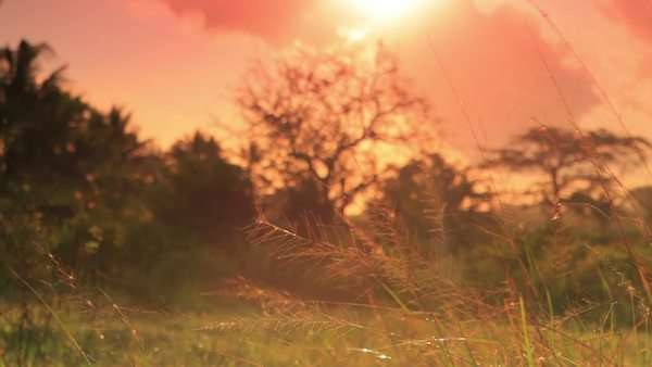 Sunset over a field near a village in Kenya two hours north of the Africa city Mombasa Royalty-free stock video