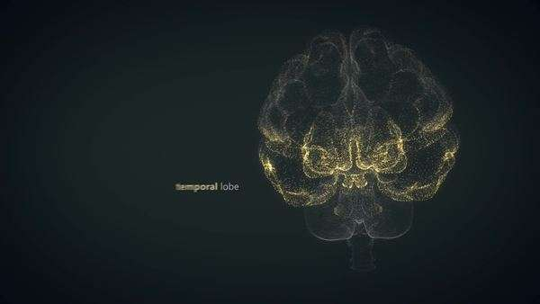 Animation presents the human brain made of small particles Royalty-free stock video
