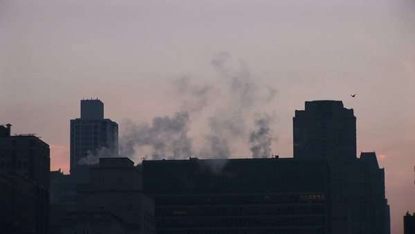 Two birds fly across the screen as steam rises from downtown buildings during golden-hour. Royalty-free stock video