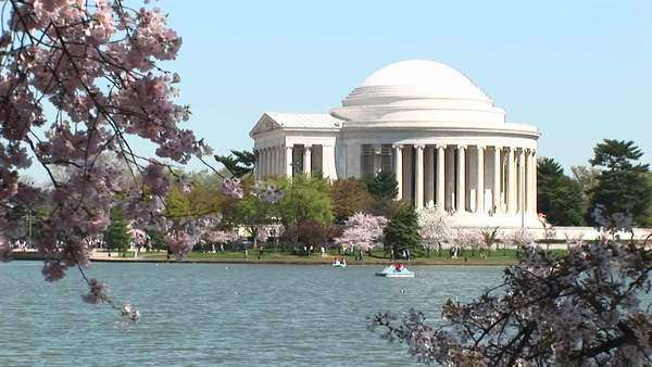 The Jefferson Memorial in Washington, D.C. is framed by branches full of cherry blossoms. Royalty-free stock video